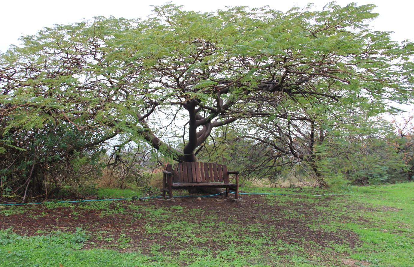 הספסל המכושף בכורסי