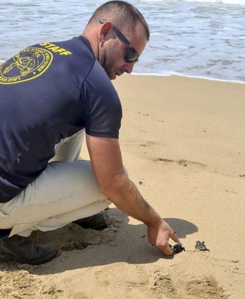 שיחרור צבים בחוף בצת